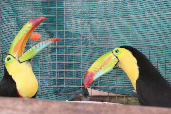 pet sitting disasters with two Toucans