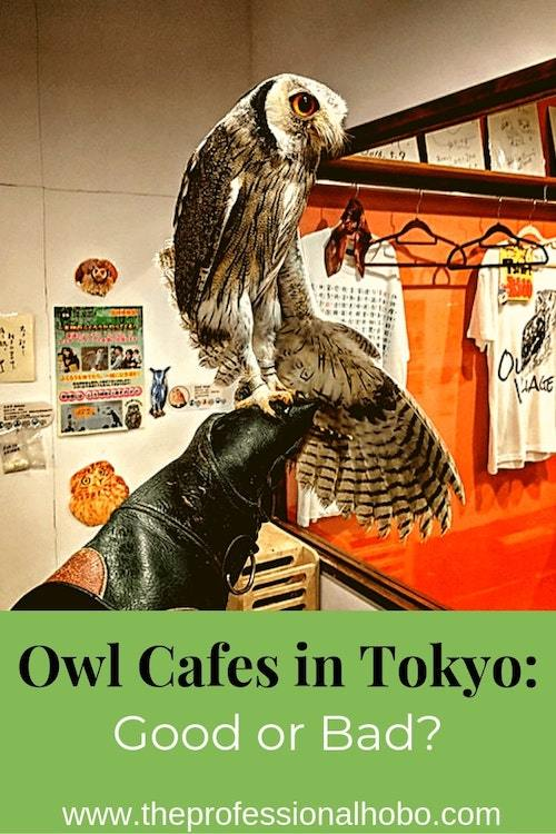 Owl cafes in Tokyo: I came, I saw, and I'm unsure whether they're cool. Here's the good and the bad, along with some food for thought about animal captivity. #TokyoCafe #OwlCafes #OwlCafesTokyo #TravelTips #FullTimeTravel #AnimalCafes #Japan #Tokyo